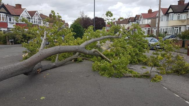 Tree fallen at junction with Waverley road and Yeading Road in Harrow on August 21. Photo: Sunil Luthra