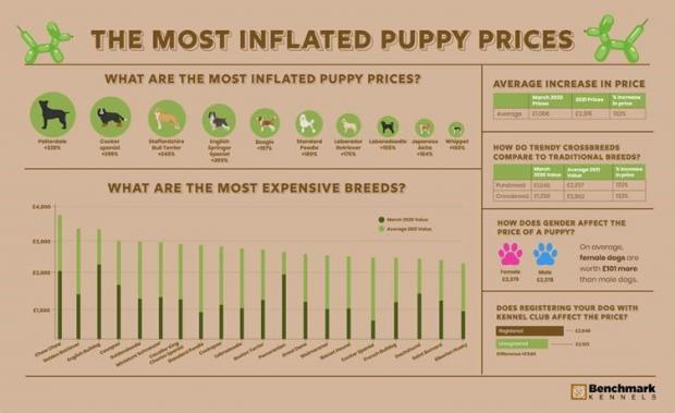 Harrow Times: The most inflated puppy prices. (Benchmark Kennels)
