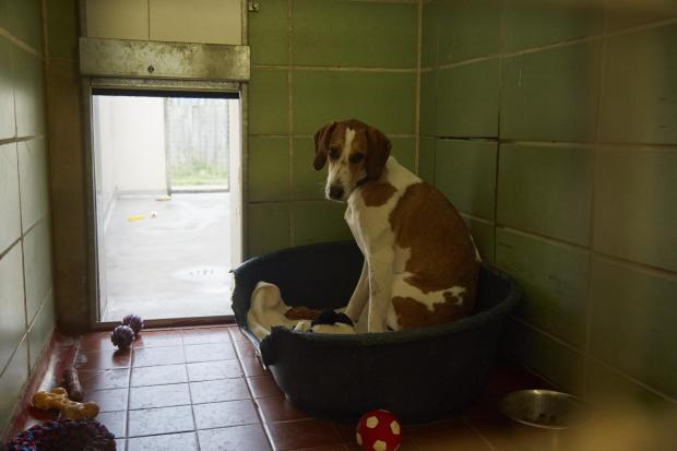 Harrow Times: Bella is looking for a forever home