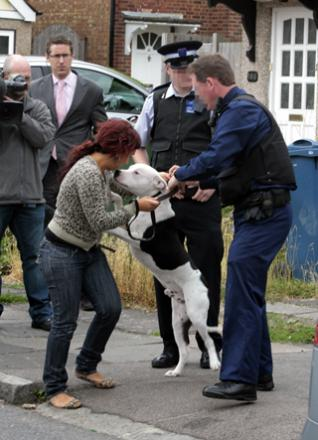 One distressed owner sees her 11-month-old dog taken away by police