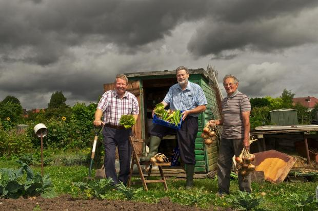 Allotment holders John Salter, Ron Dickens and John Hiller in Newton Park East (Photo: Dermot Carlin).