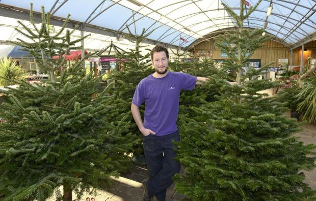 Dan Taylor will be on hand to offer Christmas tree advice