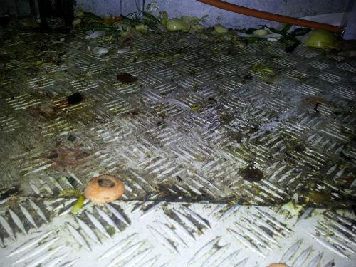 Dirt and grime encrusted surfaces at the Chennai Masala restaurant in Rayners Lane