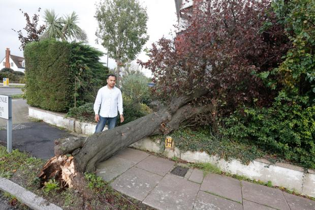 Council says it will investigate after tree falls on family home