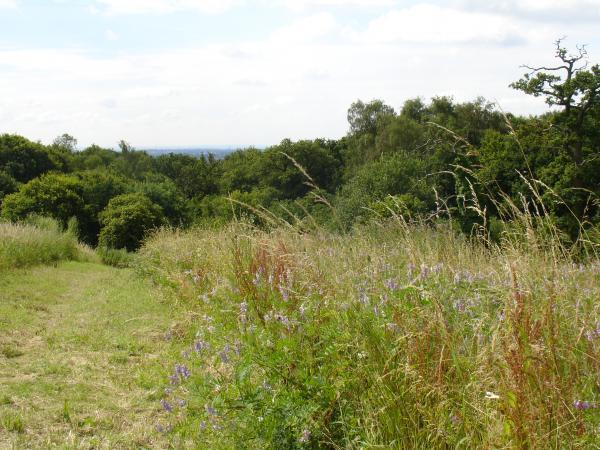 A view from Wood Farm, in Stanmore