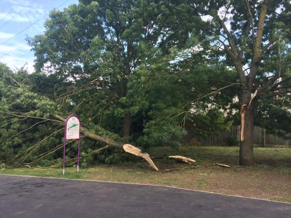 High winds from down tree branch