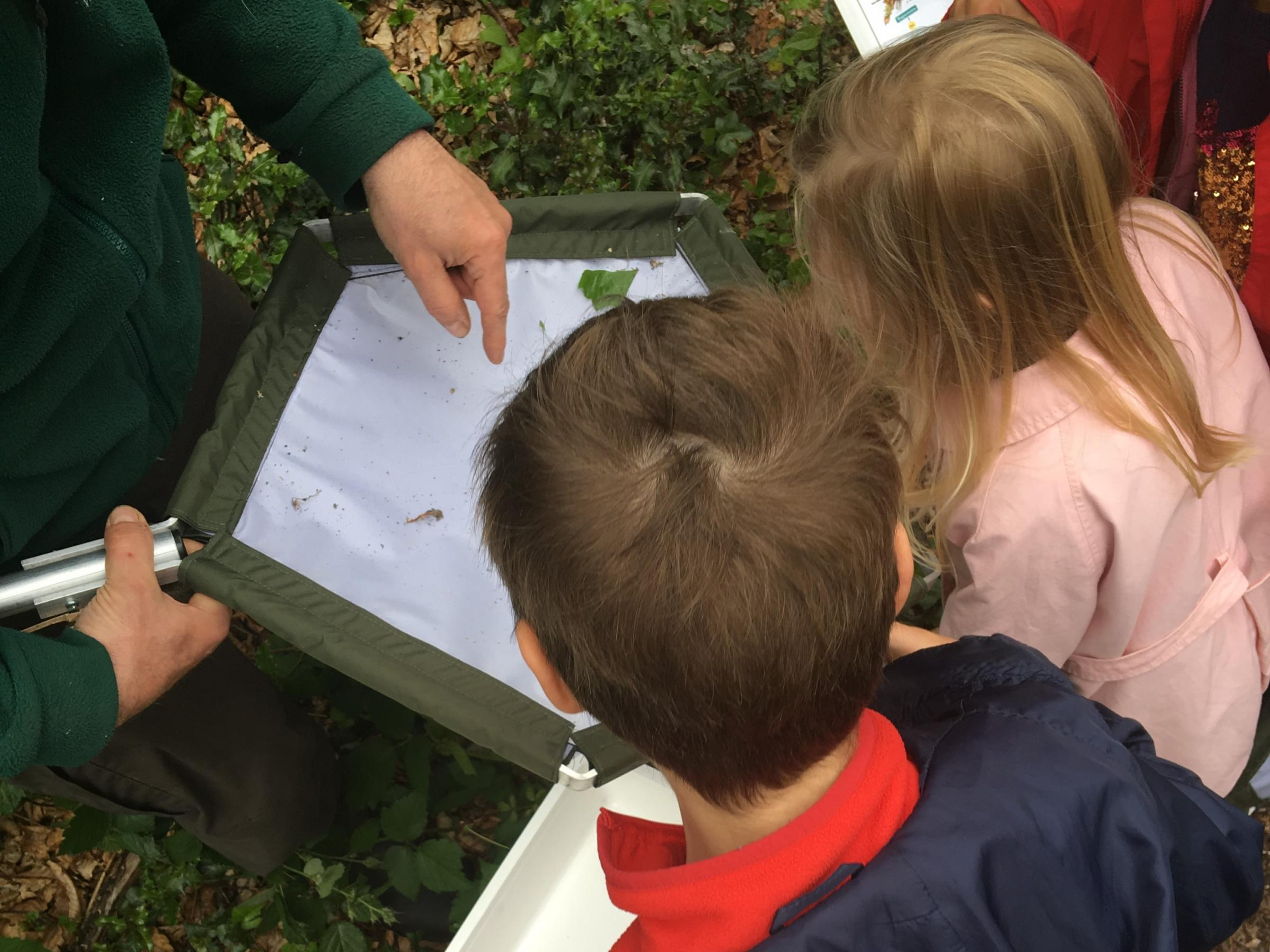 Children's Workshop: Minibeast Safari and Pond Dipping